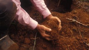 Farmer working a patch of dirt with his hands