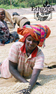 Woman Farmer of Ethiopia sorting green coffee beans, with bundle of fabric on her head
