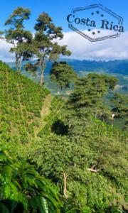 Costa Rica Coffee Farm